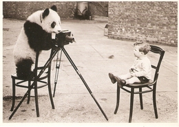 THE HULTON DEUTSCH COLLECTION BLACK & WHITE PANDOGRAPHER ENFANT / PANDA  SANTORO N° BW 870 - Illustrateurs & Photographes