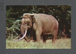 ANIMAUX - ANIMALS - ÉLEPHANT - ELEPHANT - WILD TUSKER RUHUNU NATIONAL PARK - Éléphants