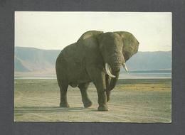 ANIMAUX - ANIMALS - ÉLEPHANT - BULL ELEPHANT IN THE GRANDEUR OF NGORONGORO CRATER - TANZANIA SAFARI - Éléphants