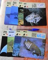 Lot De 8 Cartes Poissons éditions Rencontre 1975-1976 - Requin - Mérou - Animales