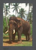 ANIMAUX - ANIMALS - ÉLEPHANT - ELEPHANT ORPHANAGE PINNAWALA SRI LANKA - Éléphants
