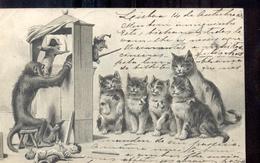 Aap - Poezen - Poppen - 1903 - Katten