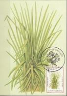 S. Tomé E Principe 1983 Sc. 714 Medicinal Plants Maximum Card Cymbopogon Citratus Piante Medicinali Maxi - Sao Tomé E Principe