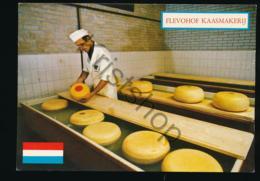 Flevohof - Kaasmakerij [AA41 0.345 - Netherlands