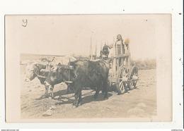 MACEDOINE CHAR A BOEUFS GUERRE DE 1914 CARTE PHOTO BON ETAT - Macédoine