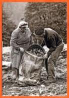 N° 85 Récolte Pommes De Terre Patates 88 Vosges Vieux Métiers - Farmers