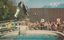 Vancouver Public Aquarium, Stanley Park, Vancouver, British Columbia White-sided Dolphin Leaping 15 Feet Damage Mark Top - Vancouver