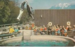 Vancouver Public Aquarium, Stanley Park, Vancouver, British Columbia Splasher A Pacific White-sided Dolphin - Vancouver