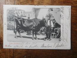 Tipo Siciliano 1901 / Catania / Taureau - Catania