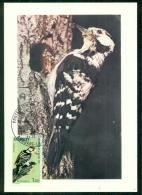 CM-Carte Maximum Card #1973-Andorre-Andorra#Oiseaux,Vögel,birds #Pics & Grimpeurs# Pic épeichette,Kleinspecht,woodpe - Cartes-Maximum (CM)
