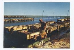 85-ILE NOIRMOUTIER -PARCS A HUÎTRES   --  RECTO / VERSO-- B53 - Ile De Noirmoutier