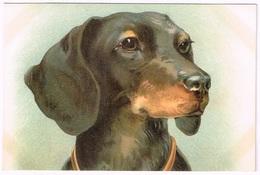 DACHSHUND / DACKEL 1900 - Künstlerkarten