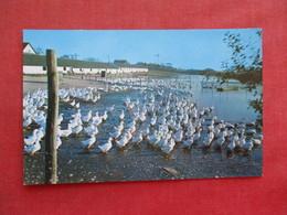 Duck Farm  New York > Long Island  .  Ref 3277 - Long Island