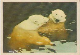 Polar Bear Russian Postcard 1964 Unused (42321) - Beren
