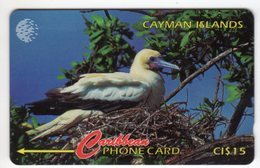 CAYMAN ISLANDS CABLE & WIRELESS MV Cards CAY-11D 1995 10$  CN 11CCID RED FOOTED BOOBY OISEAU - Iles Cayman