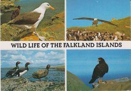 Falkland Islands 1988 Postcard To Germany Ca Port Stanley 29.7.1988 (42327) Stamp Is Damaged In Corner - Falklandeilanden
