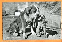 EGG935, Chien Du Grand Saint-Bernard, 1115, Circulée 1957 - Hunde