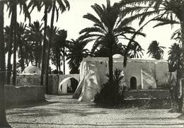 Tripoli (Libia) Oasi, Oasis - Libia