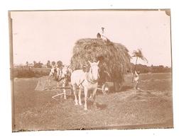 PHOTO FIN XIX ème DEBUT XX ème SIECLE - AGRICULTURE CHEVAL CHARRETTE PAILLE - PAYSAN TRAVAUX DES CHAMPS - Oud (voor 1900)