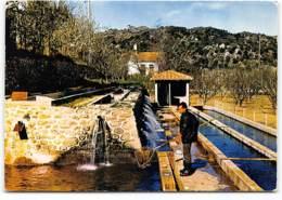 ILLE SUR TET - Les Neuf Fontaines - élevage De Truites Edit APA POUX  Pisciculture - Autres Communes