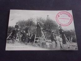 M/ 13 ARLES TRINQUETAILLE MME A VOLLAIRE LA CUEILLETTE DES OLIVES EN PROVENCE  1908 - Arles