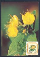 Portugal Azores 1983 Maximum Card: Flora Flowers (Hypericum Foliosum) Shrub; Strauch; Flowering Plants - Pflanzen Und Botanik