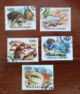 COMORES Tortue, Turtle, Tortuga, Série 5 Valeurs Emises En 2011(Oblitéré, Used) - Turtles