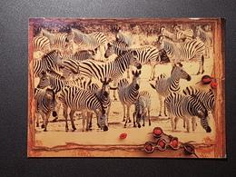 Namibia; Bild Mit Zebras (gelaufen ,1999),  H22 - Namibia