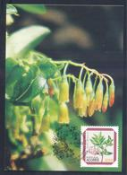 Portugal Azores 1983 Maximum Card: Flora Flowers Fruits; Regional Plants Azores;  Vaccinium Cylindraceum - Pflanzen Und Botanik