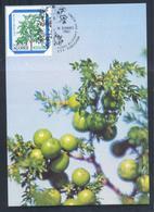 Portugal Azores 1983 Maximum Card: Flora Flowers Fruits; Regional Plants; Juniperus Brevifolia, The Azores Juniper - Pflanzen Und Botanik