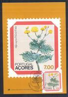 Portugal Azores 1983 Maximum Card: Flora Flowers Blume; Regional Plants; Tolpis Azorica - Pflanzen Und Botanik