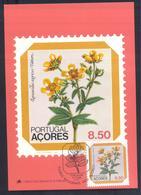 Portugal Azores 1983 Maximum Card: Flora Flowers Blume; Regional Plants; Ranunculus Azoricus Watson - Pflanzen Und Botanik