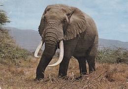 Elephant Postcard Used Good Condition - Elephants