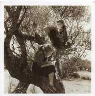1954 - PAQUES EN PROVENCE - Fillettes Dans Un Arbre - Doisneau