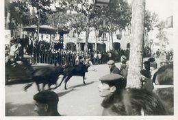 345.    A Situer.  VACHE LANDAISE- TAUREAUX - Photographs