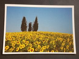 Sonnenblumen (gelaufen  1999 ),  H23 - Blumen