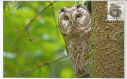 La Chouette Boréale, Belle Carte-maximum De Norvège - Owls