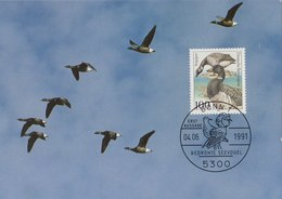 GERMANY 1991 Max Card With Geese.BARGAIN.!! - Oies