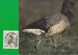 GERMANY 1991 Max Card With Goose.BARGAIN.!! - Oies