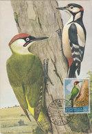 SAN MARINO 1960 Max Card With Woodpeckers.BARGAIN.!! - Spechten En Klimvogels