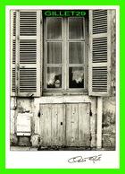 PHOTOGRAPHES - CLAUDE FAGÉ, CLICHÉ 1986 - RIDEAUX No 3 - CHAT - TIRAGE LIMITÉ No 009 / 350 - LES CHENNAVIÈRES - - Illustrateurs & Photographes