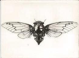Photo - Insecte En Gros Plan - Pub Transfusine - Médicament Laboratoire Médecine - Photographs