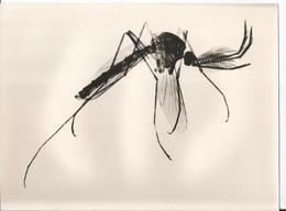 Grande Photo - Insecte En Gros Plan - Pub Transfusine - Médicament Laboratoire Médecine - Publicité - Photographs