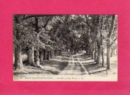 80 Somme, SAINT-VALERY-SUR-SOMME, SOUS-BOIS AU CAP HORNU, Animée, (L. L.) - Saint Valery Sur Somme