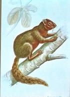 Mozambique ** & Postal Stationery, Mammals Of Mozambique, Squirrel, Paraxerus Vincenti, Hayman (1950) - Mozambique