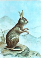 Mozambique ** & Postal Stationery, Hare, Pronolagus Crassicaudatus, Geoffroy 1983 (1832) - Mozambico