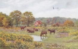 AP44 New Forest Ponies Nr. Lyndhurst - A.R. Quinton Postcard - Quinton, AR