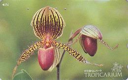 TC Japon / 110-011 - FLEUR - ORCHIDEE ** Serie TROPICARIUM ** - SABOT DE VENUS - ORCHID - FLOWER Japan Phonecard - 2429 - Fleurs