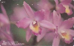 Télécarte Japon / 110-011 - FLEUR -  ORCHIDEE **  Série TROPICARIUM  IZU ORCHID PARK ** - FLOWER Japan Phonecard - 2434 - Fleurs