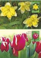 2017 Belarus - Botanical Gardens Of Minsk - Flowers - Tulips And Narcises Set Of Sheetlets - Maxicards MI B 1193/1194 - Belarus